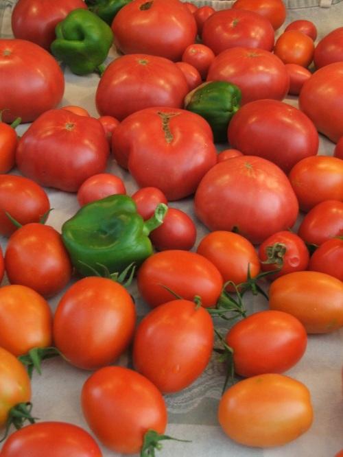 tomato-bumper-crop