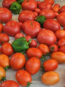 Tomato Bumper Crop